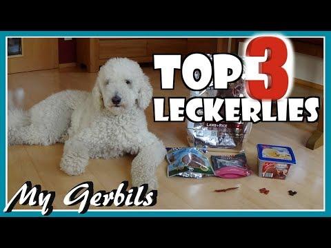 Unsere TOP 3 Leckerlies | Hund