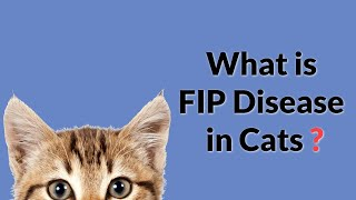 What is FIP Disease in Cats? (Easy & Complete)