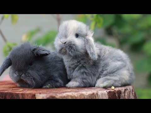 , title : 'Cute Bunnies | Baby Bunny | Cutest Rabbits In The World