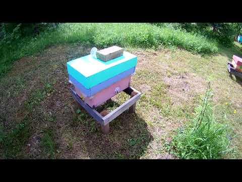 Пчеловодство Урала 2019г