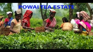 preview picture of video 'Powai Tea Estate Nagapara Division'