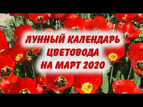 Лунный календарь цветовода на март 2020 года. Астропрогноз, гороскоп работ с цветами в марте 2020.