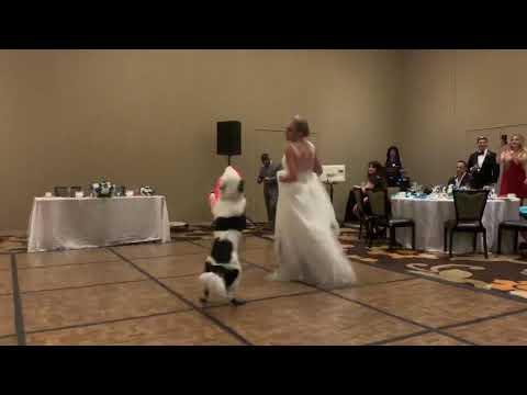 כלה טרייה מבצעת ריקוד חתונה עם כלבה המוכשר