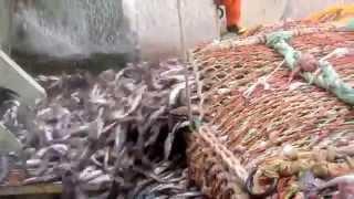 Рыболовные траулеры для прибрежного промысла