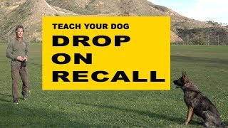 Teach Your Dog DROP On RECALL - Dog Obedience Training - Robert Cabral Dog Training Video