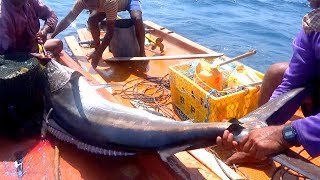HUGE SWORDFISH Caught Fishing from the DEEP SEA - RED GROUPER