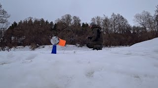 Где ставить жерлицы на реке зимой