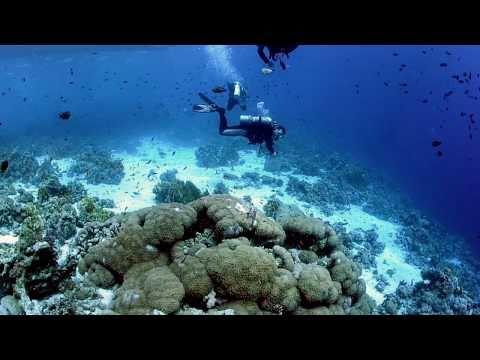 Diving Sharm el Sheik, Sharm el Sheikh - allgemein,Ägypten