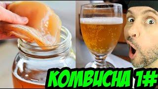 KOMBUCHA (PARTE 1): PRIMEIRA FERMENTAÇÃO (PARA FAZER REFRIGERANTE GASEIFICADO NATURAL, CERVEJA, ETC)