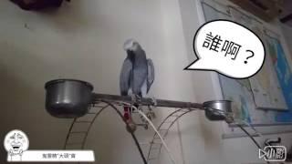 有沒有看過這麼有自信~ 這麼不要臉~ 這麼臭屁的鸚鵡😂😂  👩:魔鏡魔鏡~誰最美麗? 🐦:我啊~就是我啊!