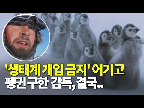 남극 펭귄을 구하기 위해, 자연의 생태계를 거스른 다큐멘터리 감독, 결국..