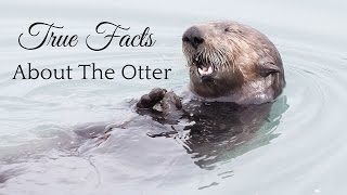 True Facts About The Otter