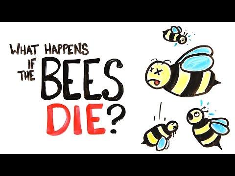 Co kdyby včely vyhynuly?