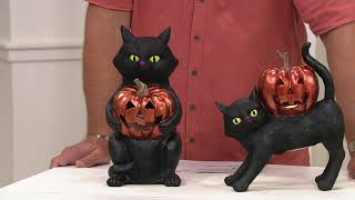 Hay & Harvest Black Cat Figurine with Illuminated Jack-o-Lantern on QVC