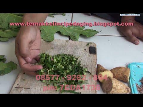 Video Ternak Kelinci - Cara Membuat Pakan Kelinci Langsung dan Fermentasi