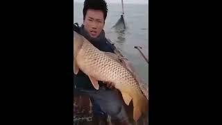 Черный баклан ловля рыбы