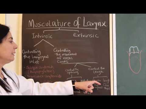Les exercices sur les muscles dentés intercostaux