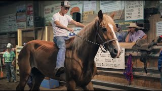 Horse Rescue Heroes: Auction Rescue