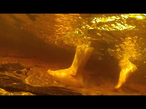 Underwater in Escanaba GoPro footage