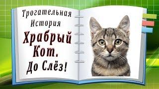 Трогательная История. Храбрый Кот... До Слёз!