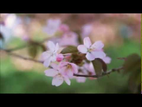 Песня счастья елка текст