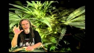 Marijuana, How To Grow Marijuana. Co2