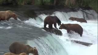 Brooks Falls, Katmai NP, Alaska video compilation 26-07-2012