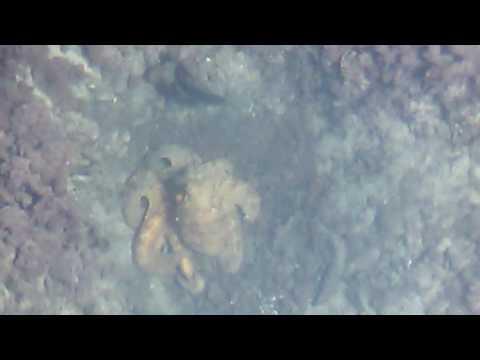 La pesca su un video del mangiatore Volga del 2016