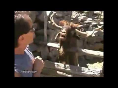 Interview mit einem Ziegenbock