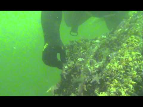 Riffe in der Ostsee