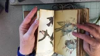 Nature Field Notes Junk Journal: Flip Through (SOLD)