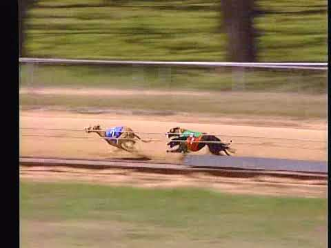 Race 55