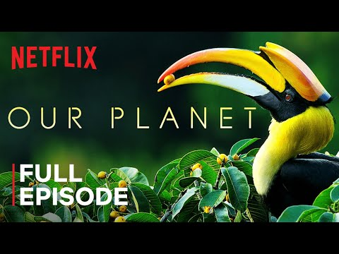 Netflix Release This Gorgeous Documentary Series Narrated By David Attenborough For Free On YouTube