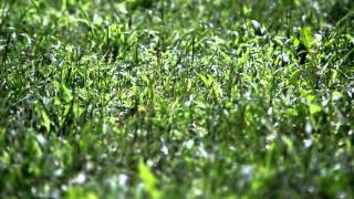 Grass 5 - Free HD stock footage