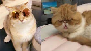 Meilleures Vidéos Drôles de Chat et de Chien 🐶🐱- Best Funny DOGS et CATS #169