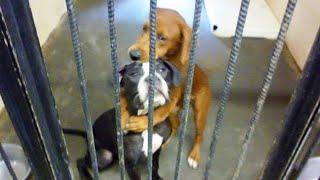 感動 犬 殺処分を目前に、檻の中で抱き合う「2匹の犬」が全米で話題に!2匹の運命は…