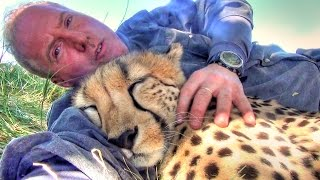 Taking A Nap With Loving Female Cheetah - Cat Cuddles & falls Asleep In Man's Arms -Needs Baby Binky