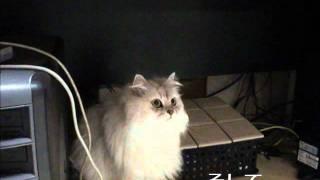 緊急地震速報を忘れない猫