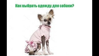 Как выбрать одежду для собаки