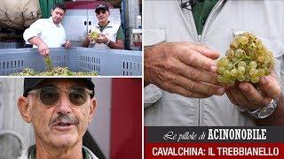 Cavalchina: La degustazione dell'uva Trebbianello