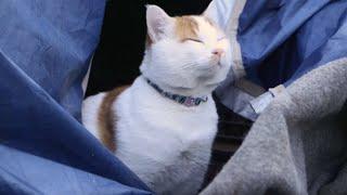 Meet Tabboush: A Syrian Cat in Greece