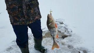 Зимняя рыбалка 2018/19. Первыми на озере дубасим окуня.