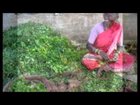 Narsamma in-house vegetable garden project
