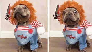 15 Funniest And Ridiculous HALLOWEEN COSTUMES For DOGS