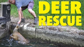 Can We Rescue a Drowning Deer Trapped in a Canal Lock?