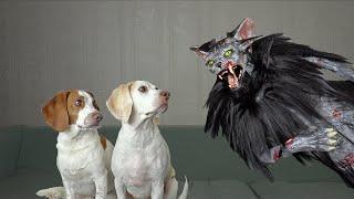 Dogs vs Zombie Cat Prank: Funny Dogs Maymo & Potpie Surprised by Zombie Cats
