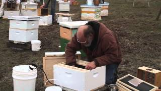 Hiving Bees In Rain And Sleet
