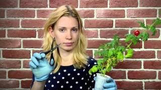 Смотреть онлайн Как сделать свой мини-огород на подоконнике в квартире
