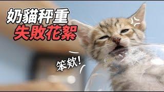 【奶貓秤重失敗花絮】志銘與狸貓
