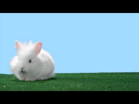 Adorable Bunny Heralds The Return Of A Sega Classic